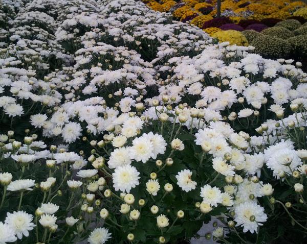 Piedras decorativas jardin precio precio affordable - Piedras decorativas jardin precio ...