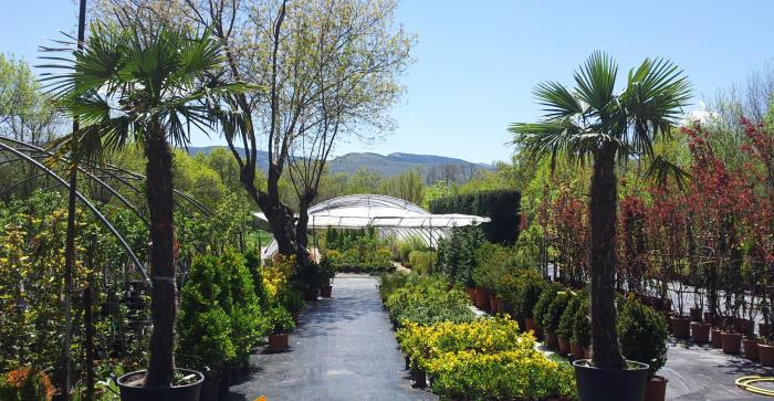 Sanmay mantenimiento jardines sierra norte jardineros podas for Arbustos decorativos jardin